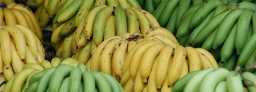 The close-up shows bananas. This picture is used for the application of BANARG.